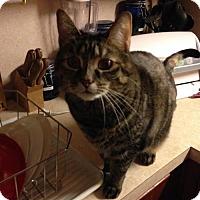 Adopt A Pet :: Savannah - Harrisonburg, VA