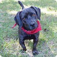 Adopt A Pet :: Fairlane - Mocksville, NC