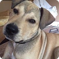Adopt A Pet :: Pistol Pete - Lakeville, MN