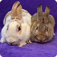 Adopt A Pet :: Rosie and Rivet - Lewisville, TX