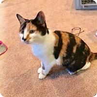 Adopt A Pet :: Rosey - Colmar, PA