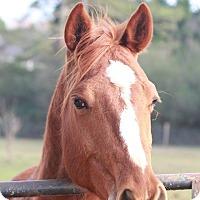 Adopt A Pet :: Curious George - cumming, GA