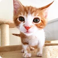 Adopt A Pet :: Gunner-Adoption Pending! - Colmar, PA