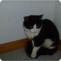 Adopt A Pet :: Tweak - Hamburg, NY