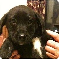 Adopt A Pet :: Whitney - Glastonbury, CT