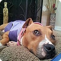 Adopt A Pet :: Jane - Orlando, FL
