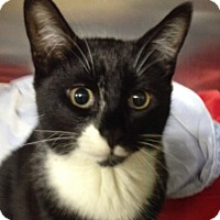 Adopt A Pet :: Frankenstein - Wayne, NJ