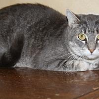 Adopt A Pet :: Phantom - Torrance, CA