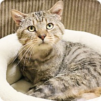 Adopt A Pet :: Hopkins - Chicago, IL