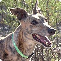 Adopt A Pet :: Kelsie - Tucson, AZ