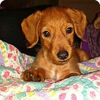 Adopt A Pet :: Rhett - Marlton, NJ