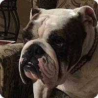 Adopt A Pet :: Drummer - Houston, TX