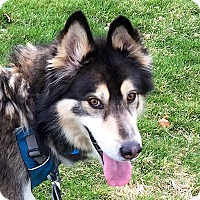 Adopt A Pet :: SPARKY-Needs Foster Home! - Boise, ID