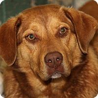 Adopt A Pet :: Margo (Spayed) - Marietta, OH