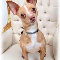 Adopt A Pet :: Stephanie - New Orleans, LA