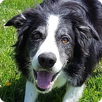 Adopt A Pet :: Skye - Grayslake, IL