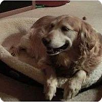 Adopt A Pet :: Moly - Denver, CO