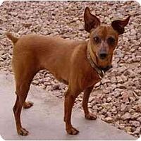 Adopt A Pet :: Roo - Phoenix, AZ