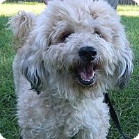 Adopt A Pet :: Lucky - Jacksonville, FL