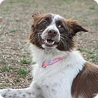 Adopt A Pet :: Hannah - Temple City, CA