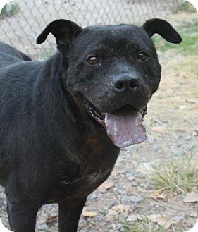 Shar Pei/Bull Terrier Mix Dog for adoption in Yukon, Oklahoma - Jessica