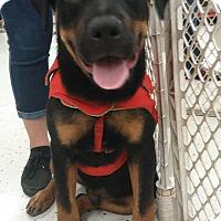 Adopt A Pet :: Prince - Miami, FL