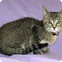 Adopt A Pet :: Asher - Powell, OH