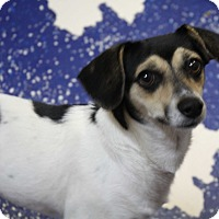 Adopt A Pet :: Penny - Rockwall, TX