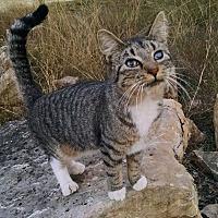 Adopt A Pet :: Marcos - Fischer, TX