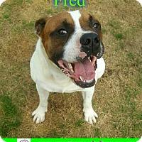 Adopt A Pet :: Fred - Pensacola, FL
