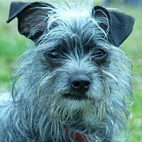 Adopt A Pet :: Arrow - Anderson, SC