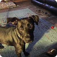Adopt A Pet :: Kiefer--in foster - Lake Jackson, TX