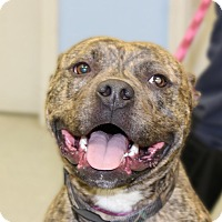 Adopt A Pet :: Mr. Chips - Martinsville, IN