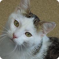 Adopt A Pet :: Saturn - Brookings, SD