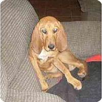 Adopt A Pet :: Sweetness - Phoenix, AZ