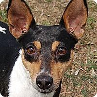 Adopt A Pet :: LuCee - Carmel, IN