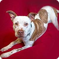 Adopt A Pet :: James - Portland, OR