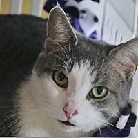Adopt A Pet :: Freedom - Grand Blanc, MI