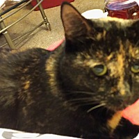 Adopt A Pet :: Cookie - brewerton, NY