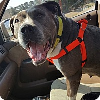 Adopt A Pet :: Sally - Snow Hill, NC