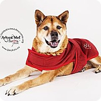Adopt A Pet :: Hiro - Denver, CO