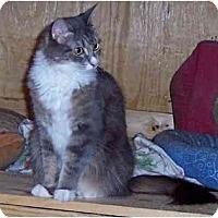 Adopt A Pet :: Precious - Summerville, SC