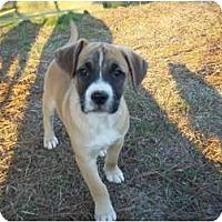Adopt A Pet :: Calvin - Adamsville, TN