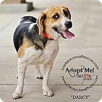 Adopt A Pet :: Darcy-Prison Obedience Traine - Hazard, KY