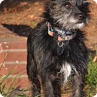 Adopt A Pet :: Malia - Simi Valley, CA