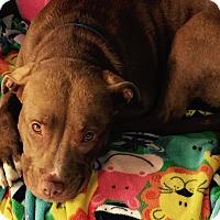 Adopt A Pet :: Heidi - Toledo, OH