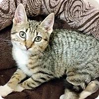 Adopt A Pet :: Cadence - East Brunswick, NJ