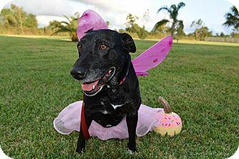 Labrador Retriever Mix Dog for adoption in Brattleboro, Vermont - Ruby