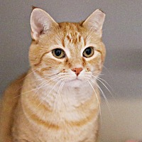 Adopt A Pet :: Middle - Lincoln, NE