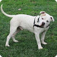 Adopt A Pet :: Axel - Sonoma, CA